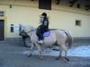 Puffin jockey 2