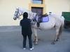 Puffin jockey 3